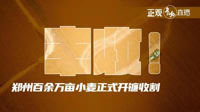 丰收!郑州百余万亩小麦正式开镰收割