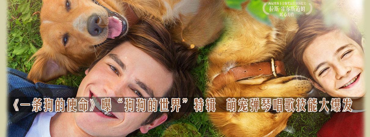 《一条狗的使命》特辑